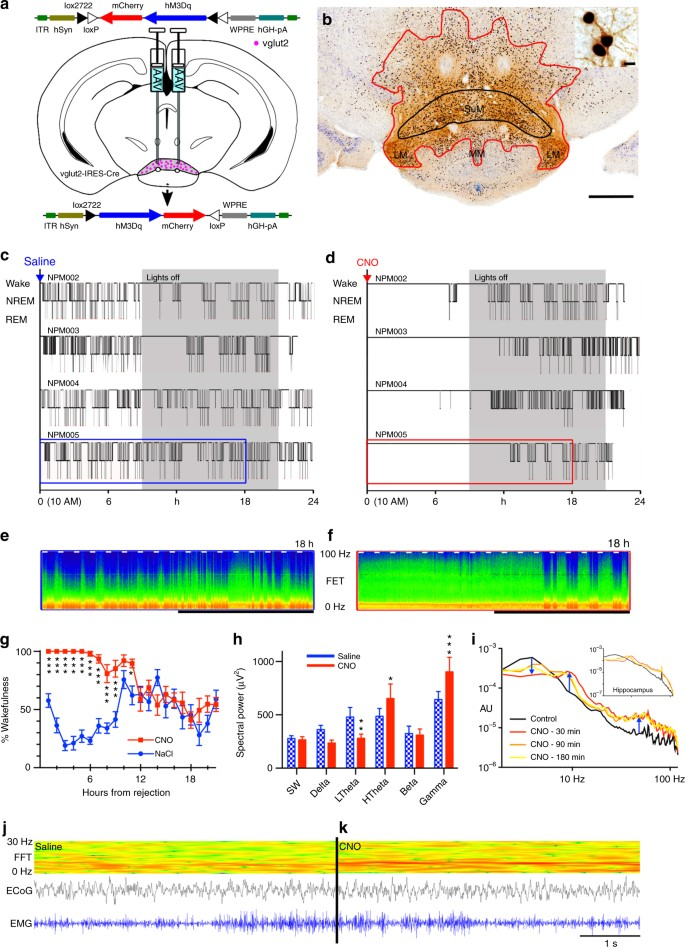 Supramammillary glutamate neurons are a key node of the