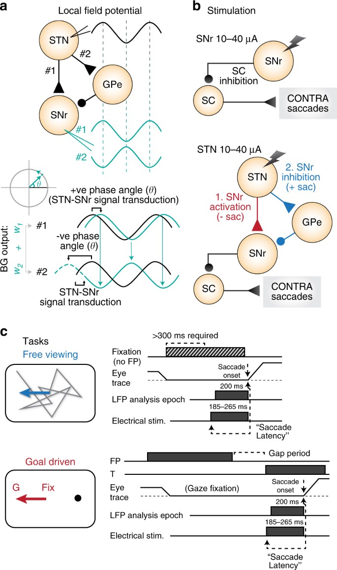 Evidence for a task-dependent switch in subthalamo-nigral