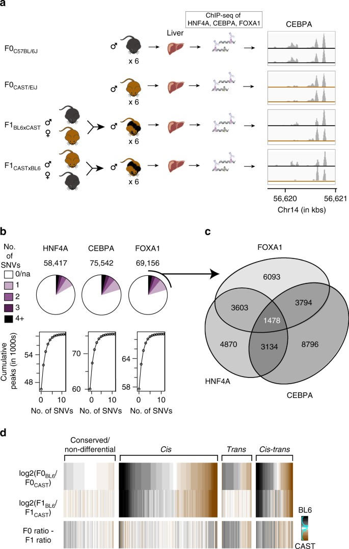 Interplay Of Cis And Trans Mechanisms Driving Transcription Factor Binding  And Gene Expression Evolution | Nature Communications