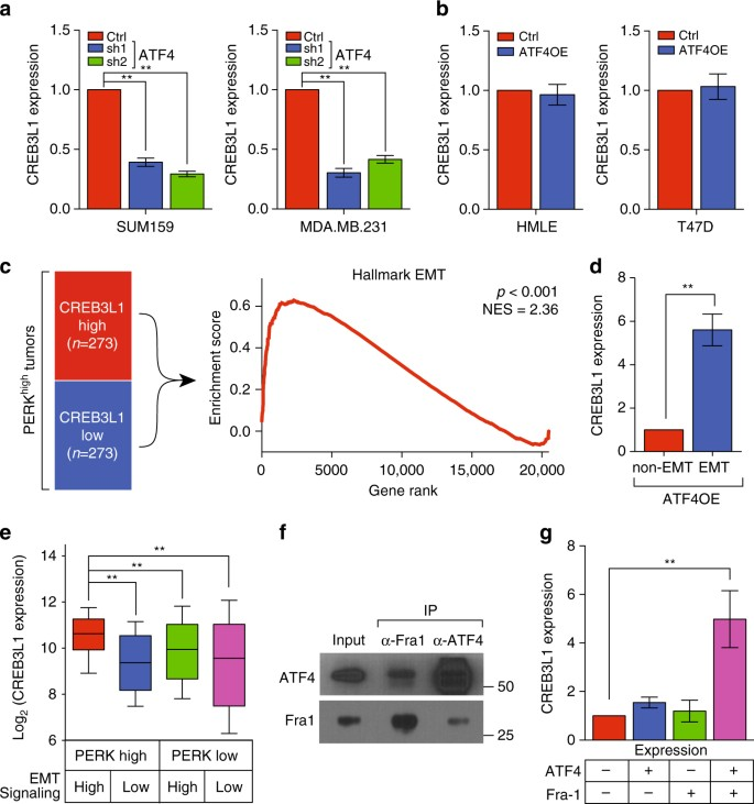 Cancer-specific PERK signaling drives invasion and