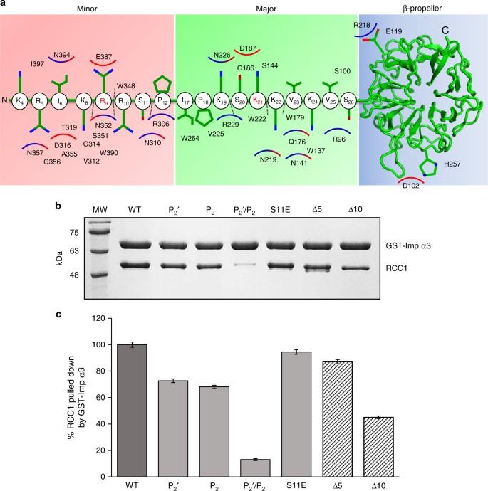 Three-diional context rather than NLS amino acid ... on