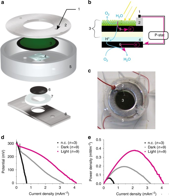 Electricity generation from digitally printed cyanobacteria