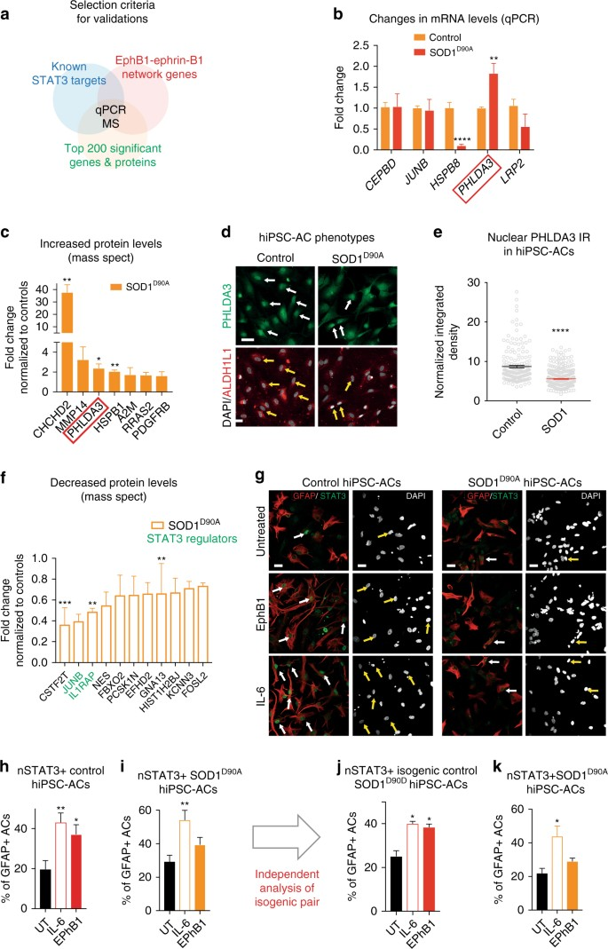 A neuroprotective astrocyte state is induced by neuronal signal