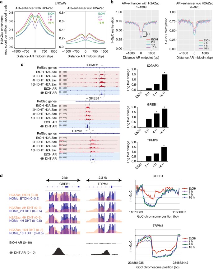 Acetylated histone variant H2A Z is involved in the activation of