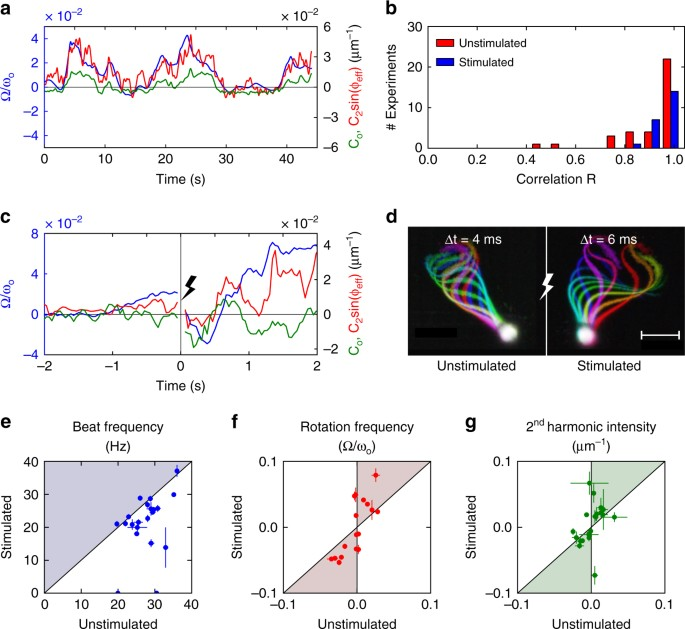 Human sperm steer with second harmonics of the flagellar