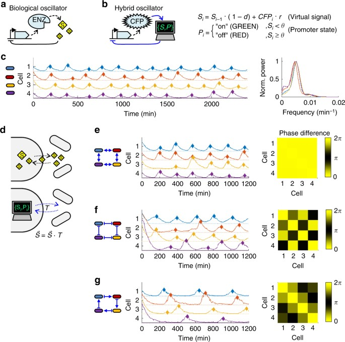 Shaping bacterial population behavior through computer