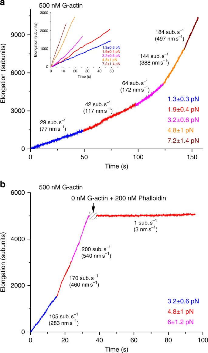 mDia1 senses both force and torque during F-actin filament