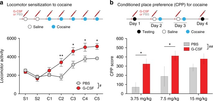 Granulocyte-colony stimulating factor controls neural and behavioral