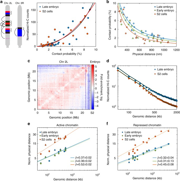 Single-cell absolute contact probability detection reveals