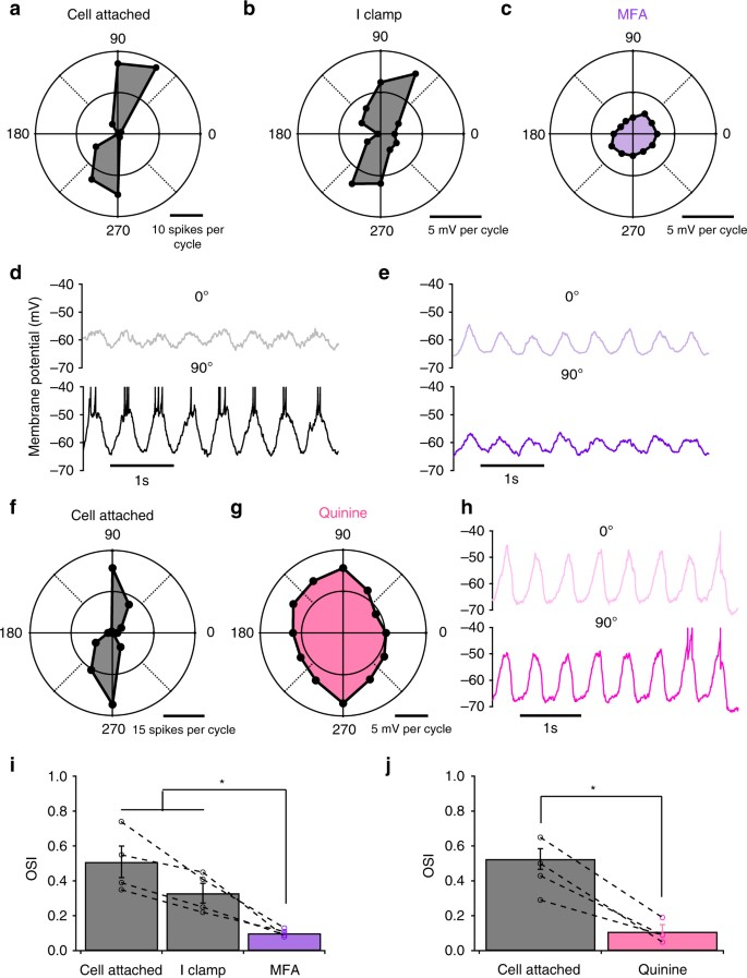 Electrical synapses convey orientation selectivity in the mouse