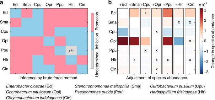 Mapping the ecological networks of microbial communities