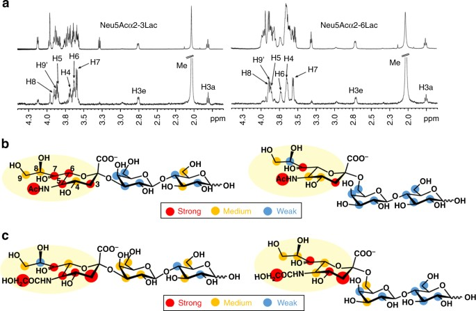 Unravelling the specificity and mechanism of sialic acid