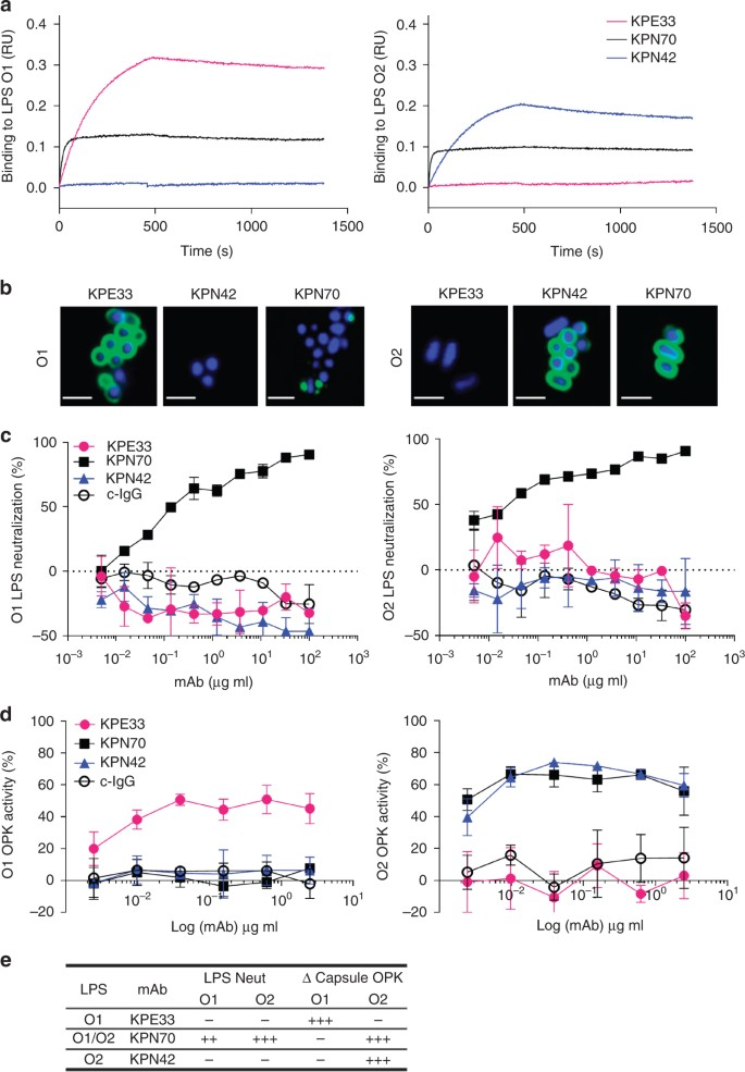 Immune stealth-driven O2 serotype prevalence and potential for