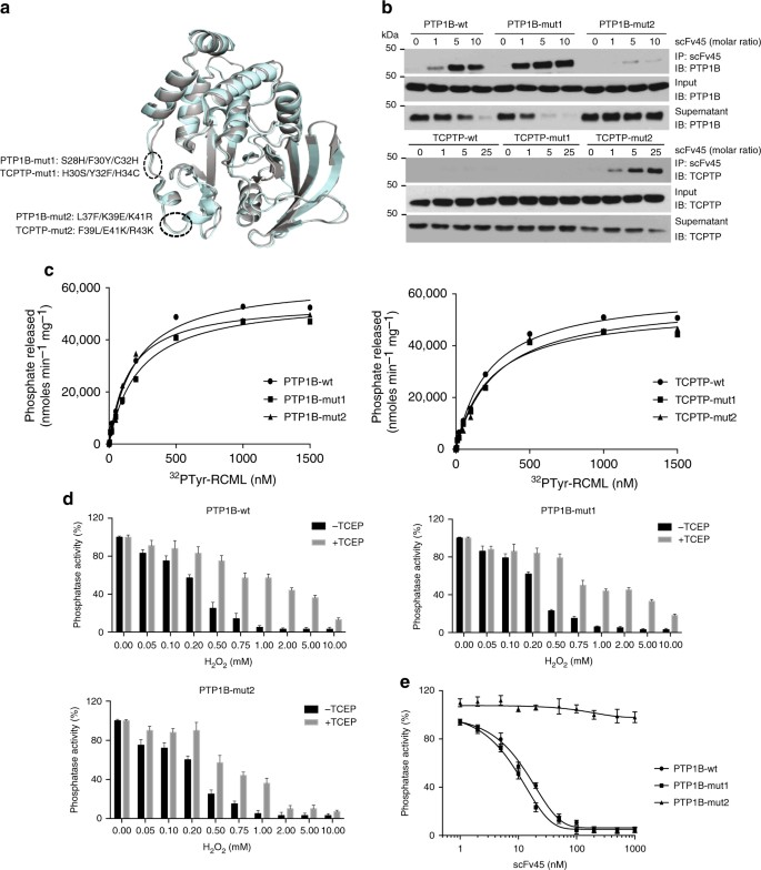 Harnessing insulin- and leptin-induced oxidation of PTP1B