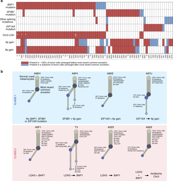 Punctuated evolution of canonical genomic aberrations in