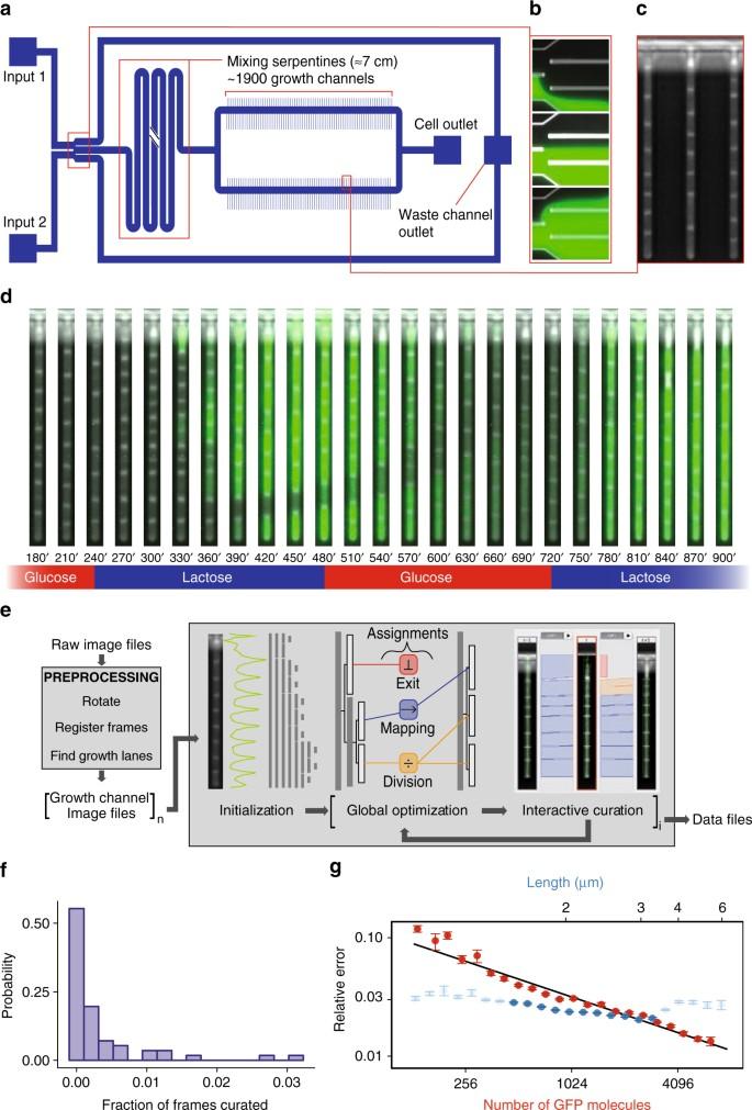 Monitoring single-cell gene regulation under dynamically