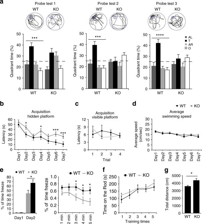 Phf8 histone demethylase deficiency causes cognitive