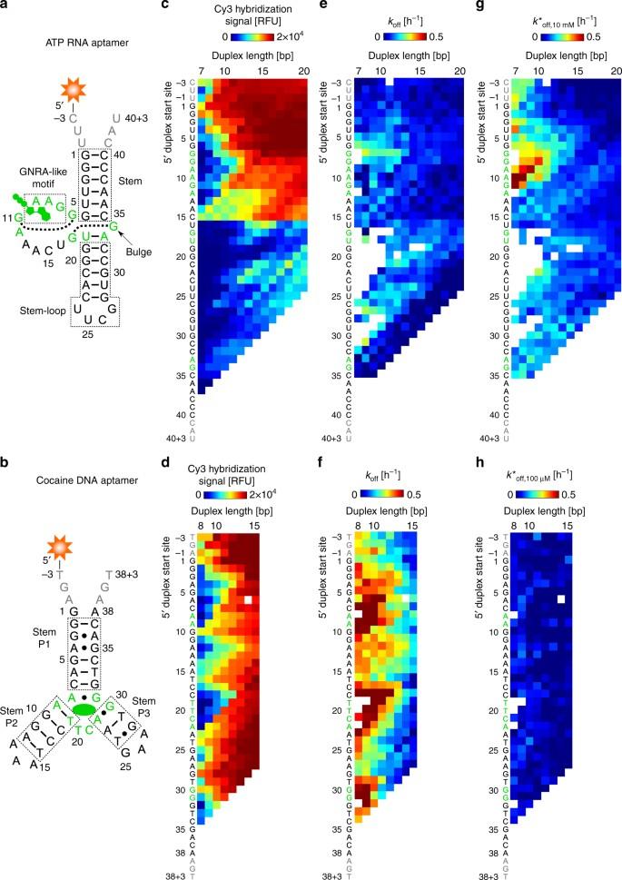 Comprehensive profiling of the ligand binding landscapes of duplexed