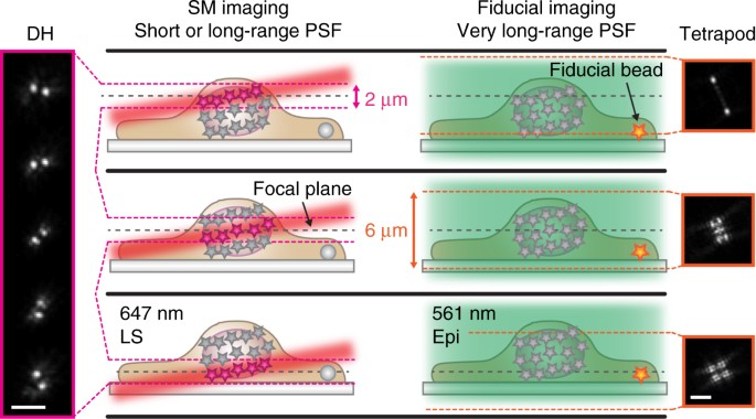 3D single-molecule super-resolution microscopy with a tilted light