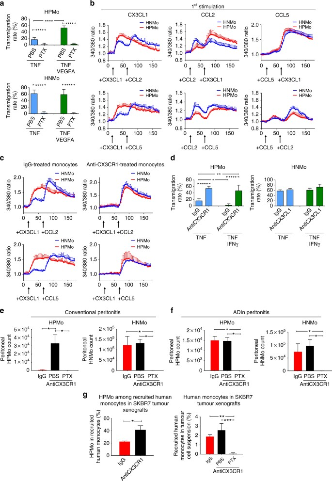 Angiogenic factor-driven inflammation promotes extravasation of