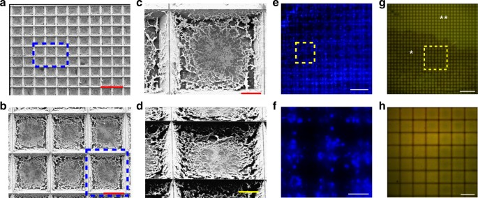 Pixelated spatial gene expression analysis from tissue