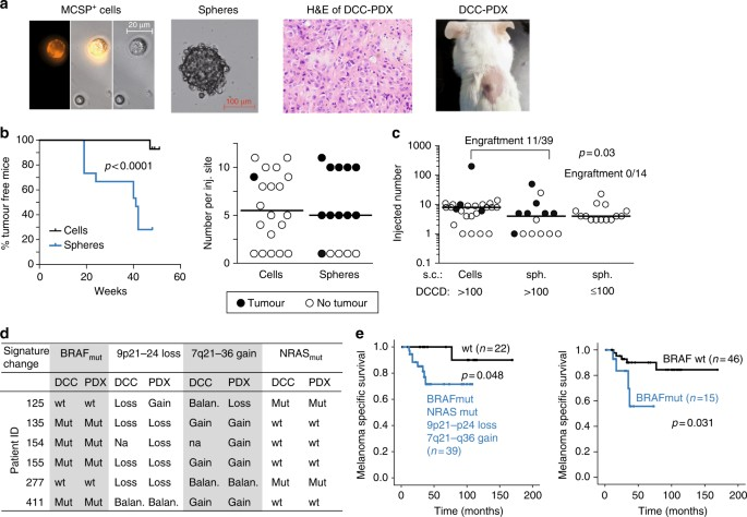 Genetic alterations driving metastatic colony formation are