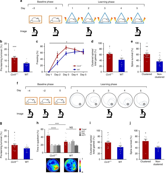 Hotspots of dendritic spine turnover facilitate clustered