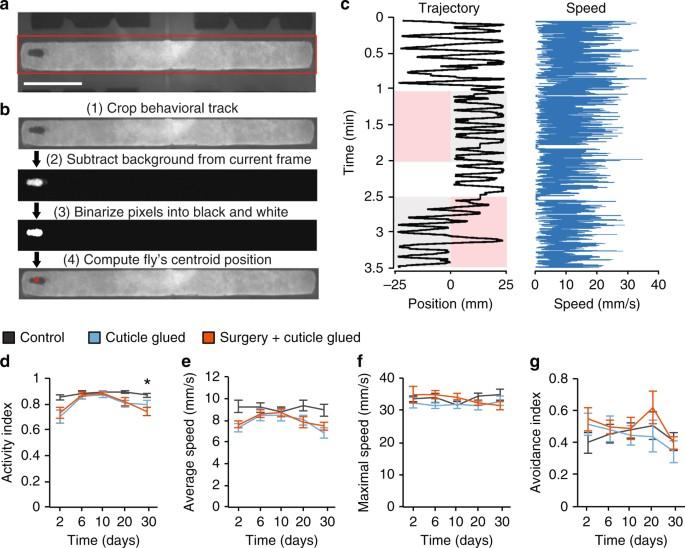 Long-term optical brain imaging in live adult fruit flies