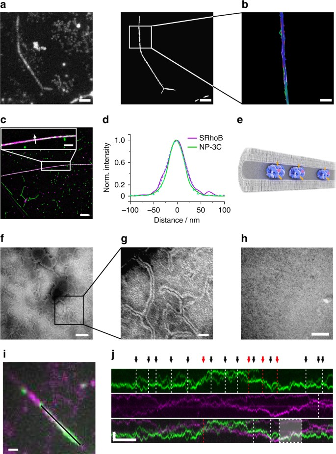 Multi-functional DNA nanostructures that puncture and