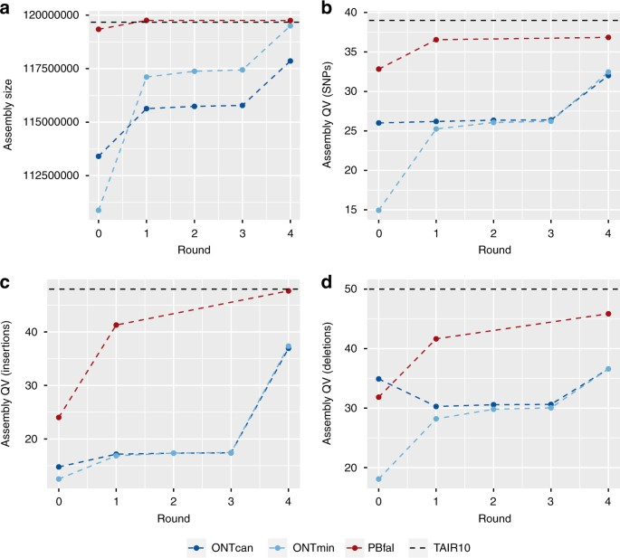 High contiguity Arabidopsis thaliana genome assembly with a