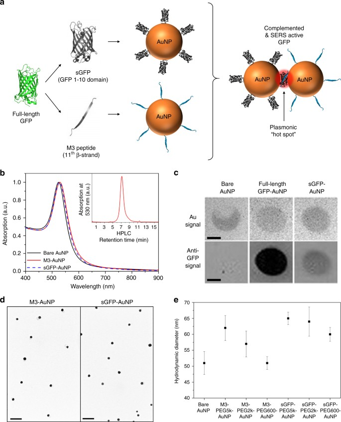 Cellular imaging by targeted assembly of hot-spot SERS and
