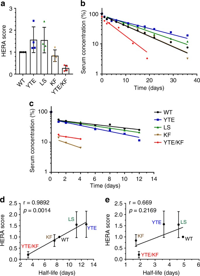 A human endothelial cell-based recycling assay for screening of FcRn