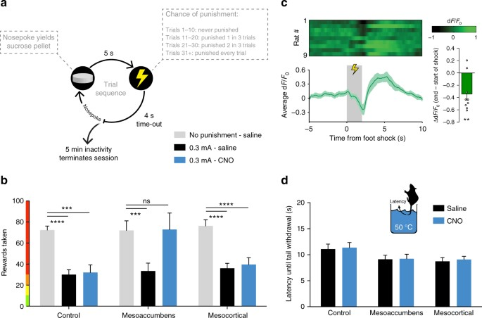 A neuronal mechanism underlying decision-making deficits during