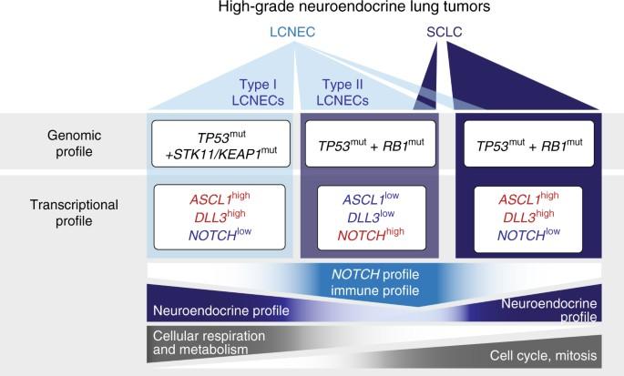 Integrative genomic profiling of large-cell neuroendocrine