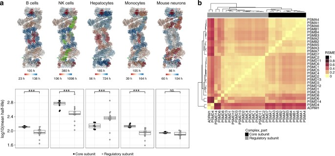 Systematic analysis of protein turnover in primary cells
