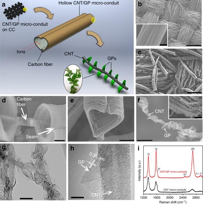 Bioinspired leaves-on-branchlet hybrid carbon nanostructure for
