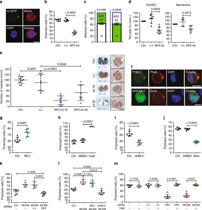 Single cell polarity in liquid phase facilitates tumour