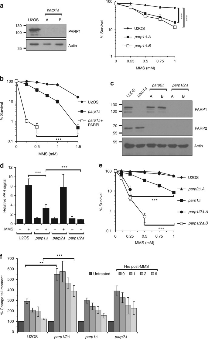 PARP1 and PARP2 stabilise replication forks at base excision