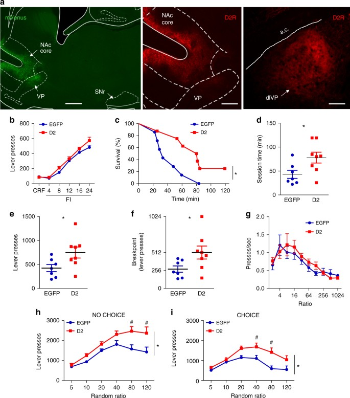 Accumbens dopamine D2 receptors increase motivation by