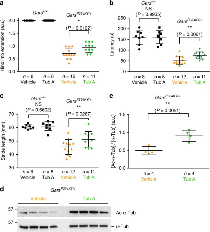 Aberrant GlyRS-HDAC6 interaction linked to axonal transport