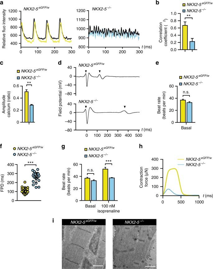 NKX2-5 regulates human cardiomyogenesis via a HEY2 dependent
