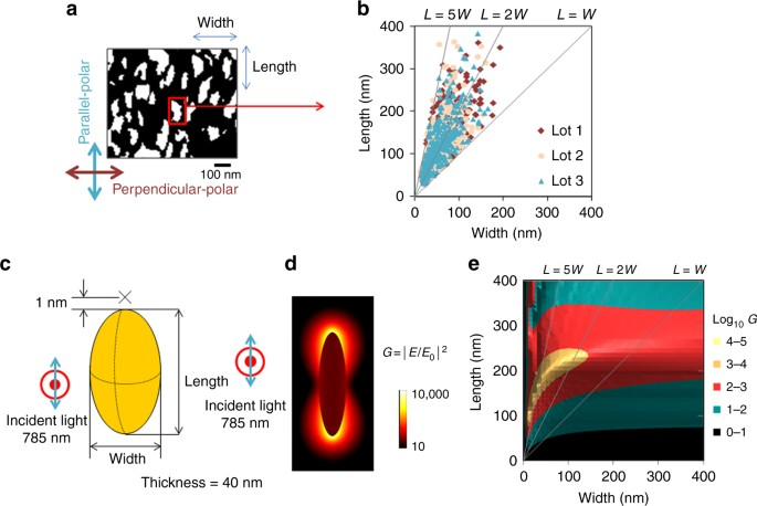 Gold-nanofève surface-enhanced Raman spectroscopy visualizes