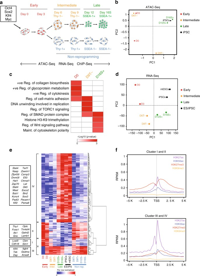 Global H3.3 Dynamic Deposition Defines Its Bimodal Role In Cell Fate  Transition   Nature Communications