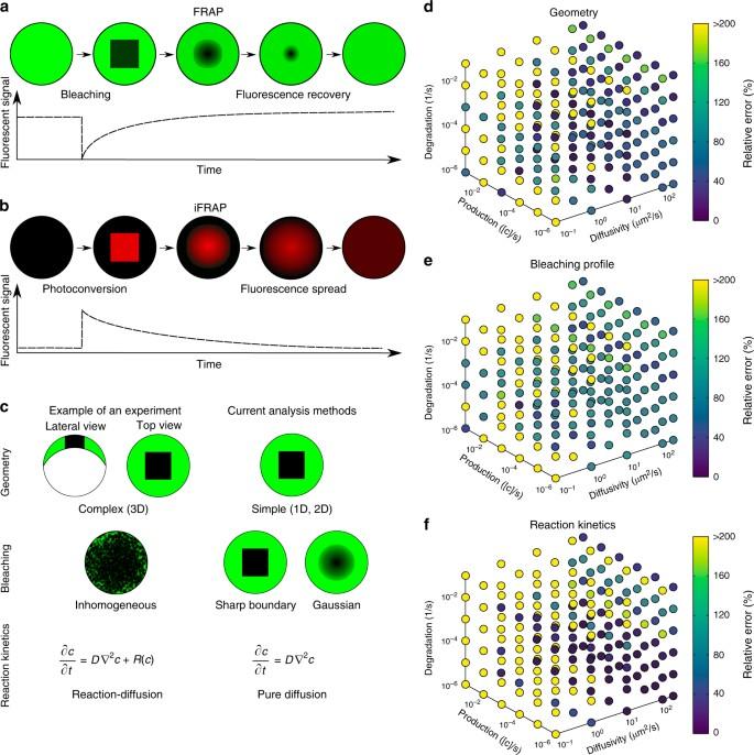 Quantitative diffusion measurements using the open-source software