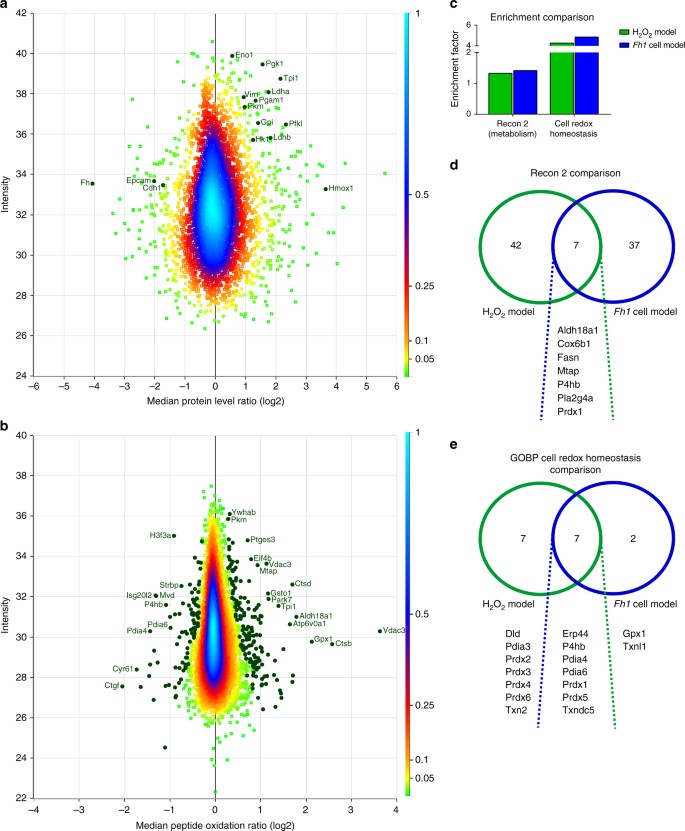 Proteome-wide analysis of cysteine oxidation reveals