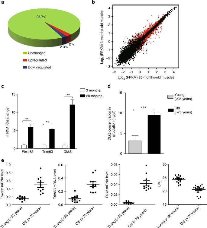 dkk3 is upregulated in muscles with age-related atrophy  a a pie diagram  indicating the percentage of genes showing expression level changes in old  versus