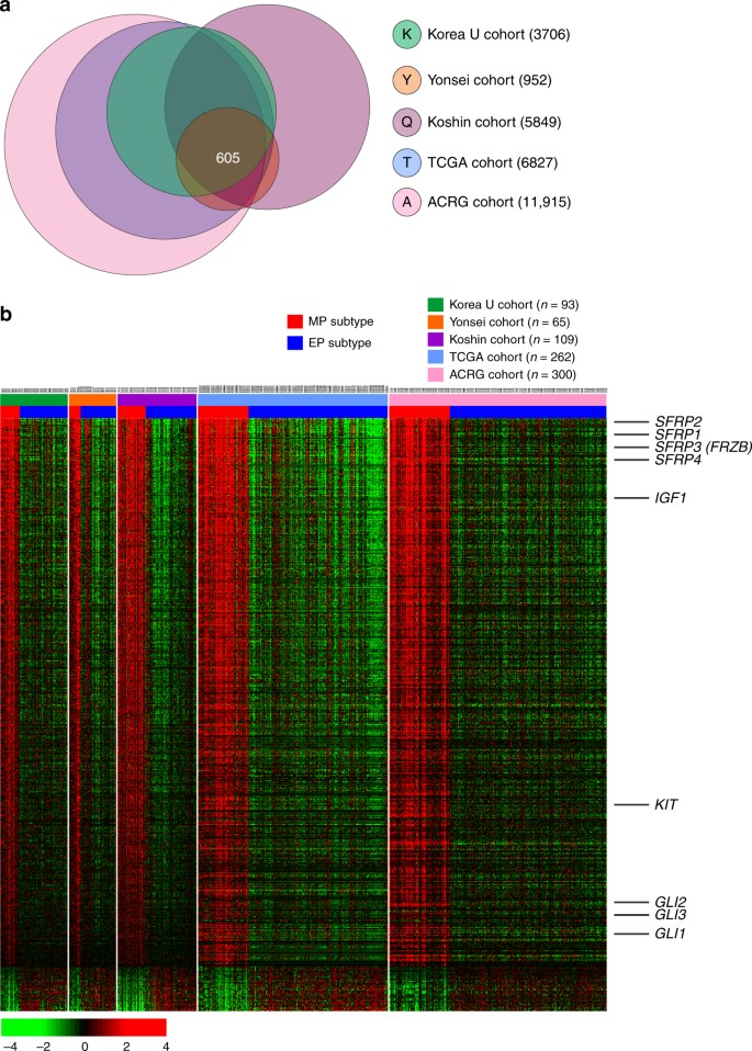 Clinical and genomic landscape of gastric cancer with a mesenchymal