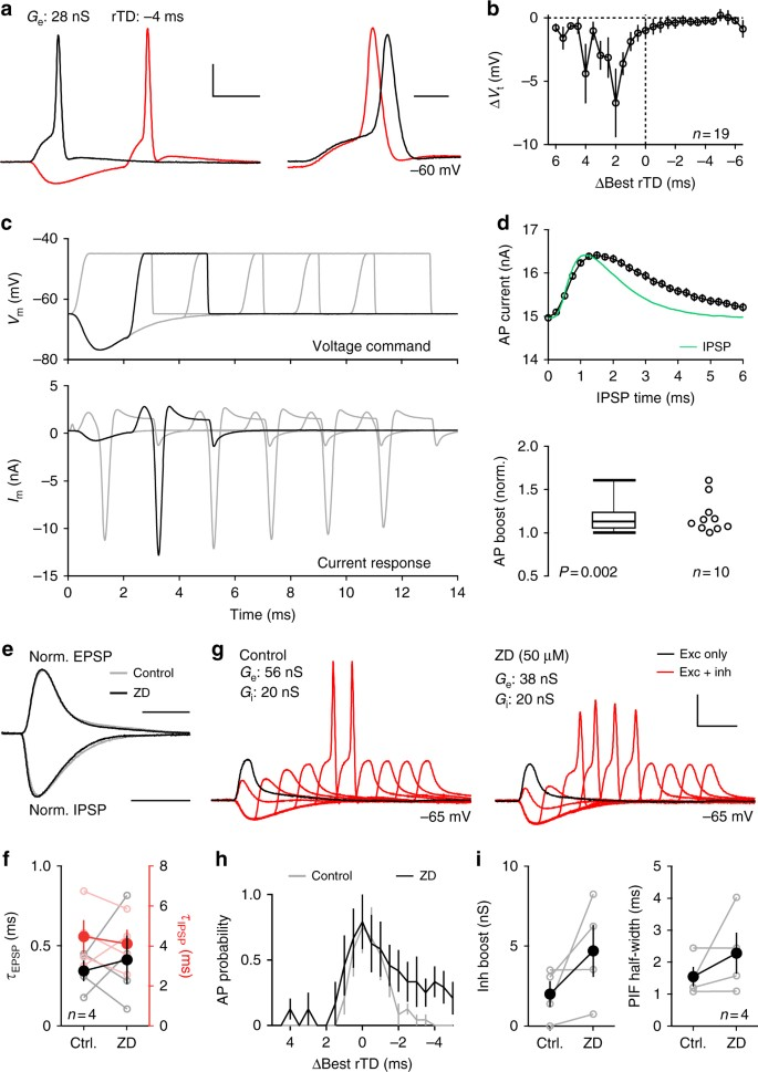 Precisely timed inhibition facilitates action potential