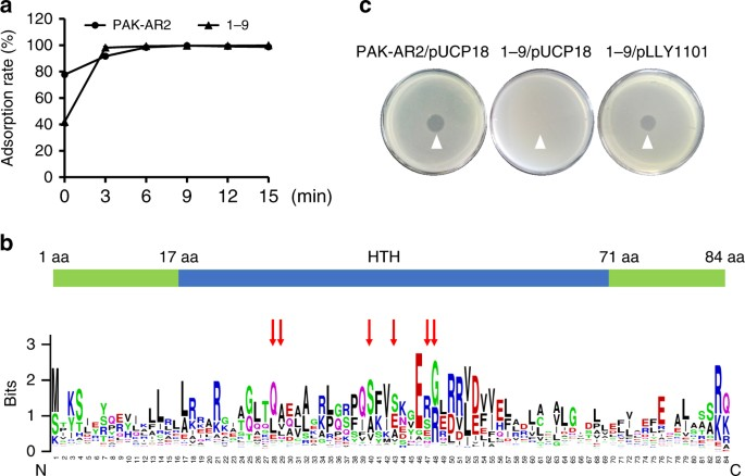 Regulatory protein SrpA controls phage infection and core cellular