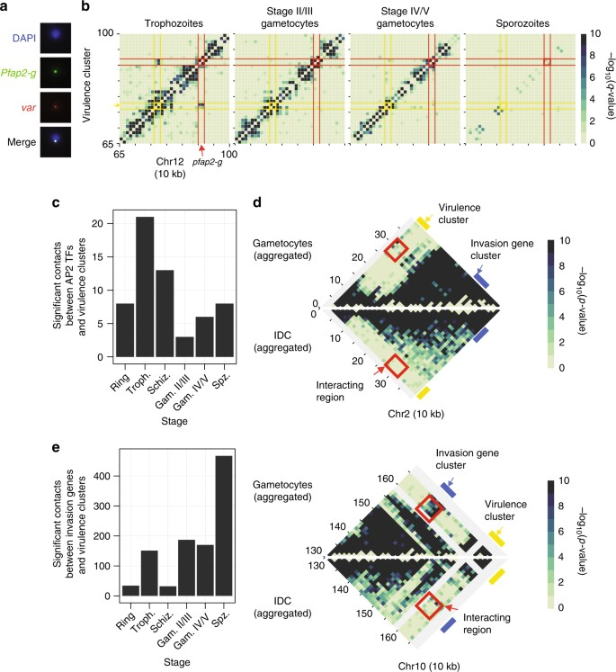 Changes in genome organization of parasite-specific gene